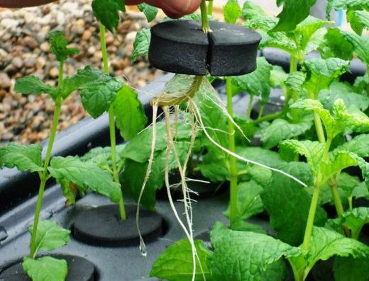 growshop