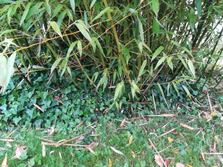Les étapes pour installer une barrière anti rhizome pour ...