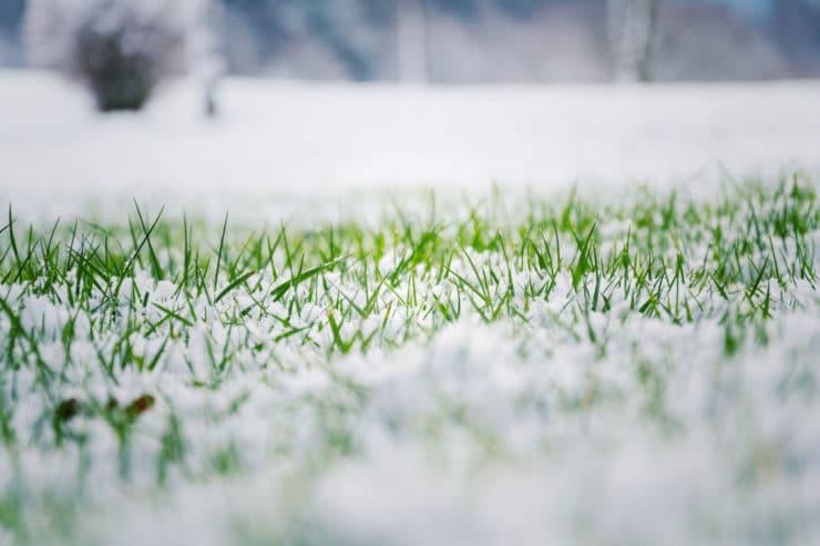 pelouse hiver